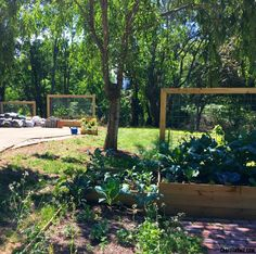 How to make DIY goat wire trellises. These completed goat wire trellises are mounted to various DIY raised beds. Both tutorials available.