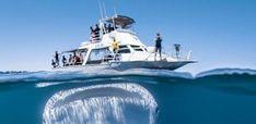 svejo.net | Китова акула на косъм да глътне яхта с туристи (СНИМКА)