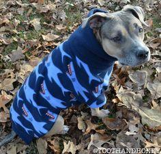 large dog shark print sweater