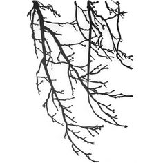 ferm Living - Wall Sticker Branches ($110) ❤ liked on Polyvore