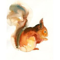 SQUIRREL by DIMDI Original watercolor painting 8X10inch(Vertical... (€27) ❤ liked on Polyvore featuring home, home decor, wall art, animals, vertical wall art, animal paintings, vertical paintings and animal wall art