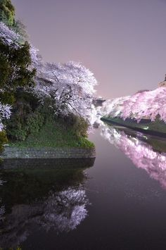✯ Night cherry tree in full bloom, Japan