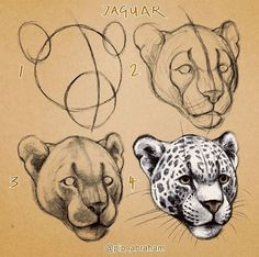 Of all the big cats I think this one is the most mysterious to me. Fish Drawings, Art Drawings Sketches, Animal Sketches, Animal Drawings, Cheetah Pictures, Cat Anatomy, Art Painting Gallery, Nature Sketch, Animal Heads