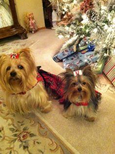 Roxi & Sassie!