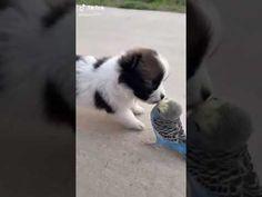 Funny Animal Videos, Funny Animals, Puppies, Cats, Cubs, Gatos, Funny Animal, Hilarious Animals, Cat