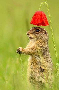 Un parapluie aussi adorable que fragile, pour un écureuil aussi adorable que malin . 😉😊 / An umbrella as adorable as fragile, for a squirrel as adorable as malignant . Forest Animals, Nature Animals, Animals And Pets, Baby Animals, Funny Animals, Cute Animals, Cute Creatures, Beautiful Creatures, Animals Beautiful