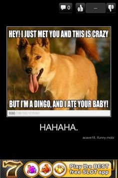 Oh Dingo, You made this song better
