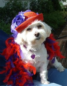 Possibly a member of the Red Hat Society? Beautiful!