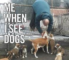 犬を見つけると、まるで芸能人を見つけたかのようなリアクションをとってしまう。byカラパイア