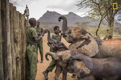 Had the members of northern Kenya's Samburu tribe encountered an injured or abandoned baby elephant a year ago, they likely would have left it to die. Today, with the support of the Reteti Elephant Sanctuary, locals are working to save endangered calves.