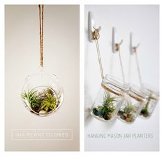 Rtw air plant chandelier tutorial air plants plants and apartments air plants succulents diy roundup very shannon aloadofball Image collections