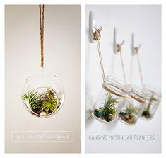 Air plants & succulents DIY Roundup // Very Shannon