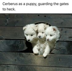 """30 Adorably Amusing Animal Memes That'll Give You A Heckin Chortle - Funny memes that """"GET IT"""" and want you to too. Get the latest funniest memes and keep up what is going on in the meme-o-sphere. Humor Animal, Funny Animal Memes, Cute Funny Animals, Funny Cute, Funny Memes, Dog Memes, Funny Humour, Animal Quotes, Puppy Meme"""