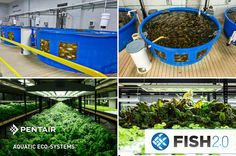 We're proud to support Fish 2.0 a business competition that accelerates growth in the sustainable seafood sector.   The Pentair Aquatic Eco-Systems Open Door Prize is FREE ADMISSION for five Fish 2.0 finalists to one of two workshops to be held in Florida in spring 2016.  Read more: http://www.fish20.org/news/9-news/174-fish-2-0-new-prizes-4
