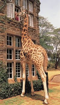 """Everyone seemed to love the South African hotel from last week, so here's another one to add to the mix. Aside from top-notch cooking and comfortable accommodations, The Giraffe Manor is known for, you guessed it, a friendly herd of giraffe. Bizarre! (As one reader sweetly put it, ""I so want to wake up to a giraffe batting her eyelashes at me. Adorable."")"""