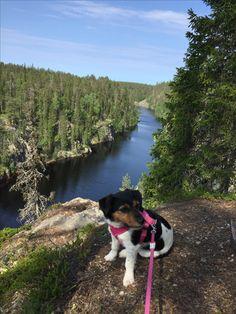 Hossa nationalpark. Julma ölkky. Hiking. Finland. Trekking. Retkeily. Patikointi
