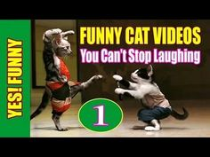 BEST FUNNY CATS IN COUB ПРИКОЛЬНЫЕ КОШКИ FUNNY ANIMALS #9 -  #animals #animal #pet #cat #cats #cute #pets #animales #tagsforlikes #catlover #funnycats Cats are the funniest animals on Earth, they make us laugh all the time! Just look how all these cats & kittens play, fail, get along with dogs, make funny sounds, get angry, sleep, … So... - #Cats