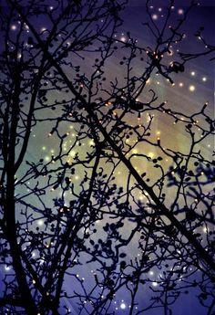 stars on a summer night