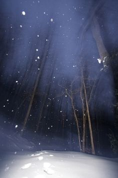 Pisgah National Forest - North Carolina - USA - Snowy Night by Vince LaMonica on 500px
