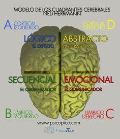 Ned Herrmann se interesó en clasificar los métodos de dominancia y preferencias cerebrales de las personas con fines educativos y profesionales.