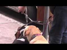 fillmore st dogs 1 18 2015