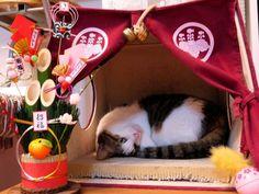 初詣は猫神社へ^^!(きり)