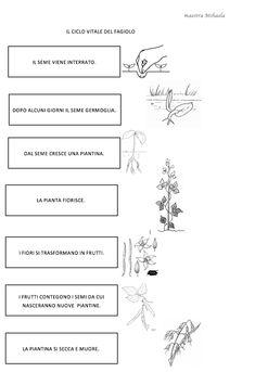Esseri viventi e non viventi, classe prima – Maestra Mihaela Plant Science, Montessori, Coding, Math Equations, Education, School, Fagioli, Studio, Geography