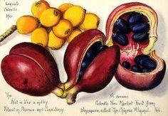 21871 tonge fruit.jpg