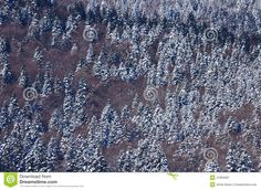 Photo about Aerial winter pine forest, frozen trees at Baile Tusnad, Romania. Image of woods, weather, romania - 47894087 Photos For Sale, Stock Photos, Pine Forest, Romania, Woods, Frozen, Trees, Winter, Image