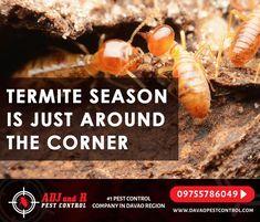 Best Pest Control, Davao, Around The Corner, Telephone, Phone, Phones