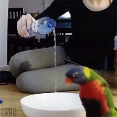 Exciting Parrot GIF. That must be some hiiiigh quality H20!