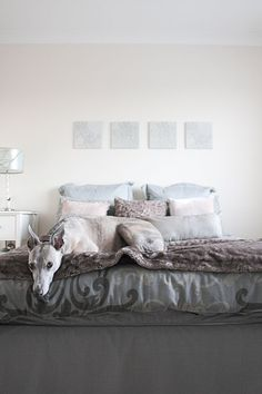 "Sneak Peek: Belinda Love Lee. ""This is Dash our beloved whippet sleeping in Sarah's room. He is a 40mile/hour couch potato! Like all whippets he loves his runs, but when at home all he really does is crash and sleep. It's nice to have something to snuggle with through out the day when I need a break from work."" #sneakpeek"