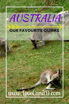 When visiting the land down under you'll definitely encounter some quirks. Here are our favourites for you to look our for.