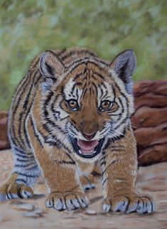 Hear My Roar (soft pastels) by *Sarahharas07 on deviantART ~ South China Tiger cub