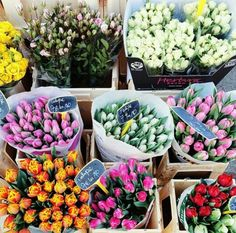 Tulips... The beauty of FLOWERS