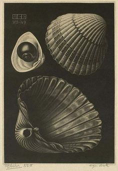 Sea-Shells.  July 1949  Mezzotint, first state