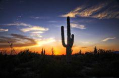 Sonoran Desert Sunset   Sonoran Sunset Photograph - A Sonoran Sunset Fine Art Print