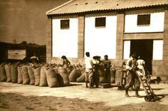 Todo el agricultor que tenía almacenes guardaba todo o parte del arroz que le quedaba libre donde solíamos amontonarlos, hasta el techo, mediante escaleras construidas con sacos.