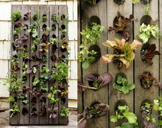 Vertical Salad Garden by Anne Phillips via apartmenttherapy #Vertical_Garden #Anne_Phillips #apartmenttherapy