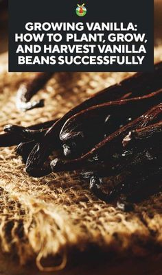 Growing Vanilla: How to Plant, Grow, and Harvest Vanilla Beans Successfully