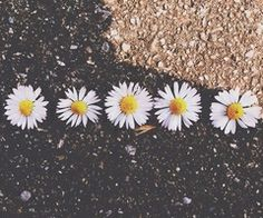 5 little flowers.