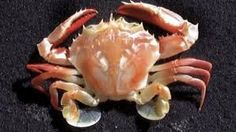 Image result for interesting ocean animals
