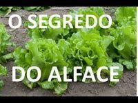 Herb Garden, Vegetable Garden, Home And Garden, Growing Seeds, Self Watering, Healthy Habits, Soul Food, Lettuce, Celery