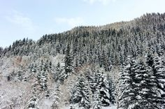 Winter forest  free high-resolution photo about Landscape Nature alps Austria background beautiful cold color country forest hill ice image landscape mountain nature outdoors pine season snow sun Terrain tree trees white wild winter Winter landscape Winter snow wood