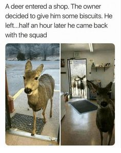 Funny animal pictures memes to make you laugh. Check this collection of latest animal pictures meme dump of the day Funny Animal Jokes, Funny Animal Pictures, Cute Funny Animals, Animal Memes, Funny Cute, Hilarious Pictures, Gif Pictures, Funny Animal Sayings, Cutest Animals