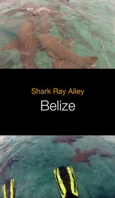 Scuba diving and snorkeling in Belize between Caye Caulker and Ambergris Caye, including popular Shark Ray Alley.