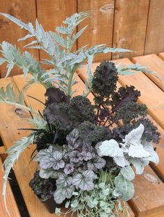 cardoon, coral bells, silver falls Dichondra, dusty miller and purple kale~by Kim Gamel