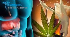 Where to legally buy cannabis oil for those suffering from cancer Cancer Cure, Cannabis Oil, Hemp Oil, The Cure, Stuff To Buy