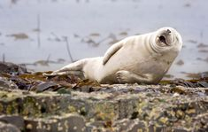seal comedy wildlife photography