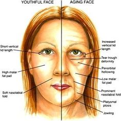 Anti Aging Herbs ~ not just for the face